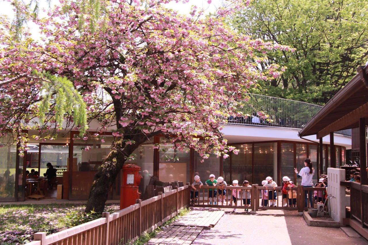 The world's coolest kindergarten- the Fuji School