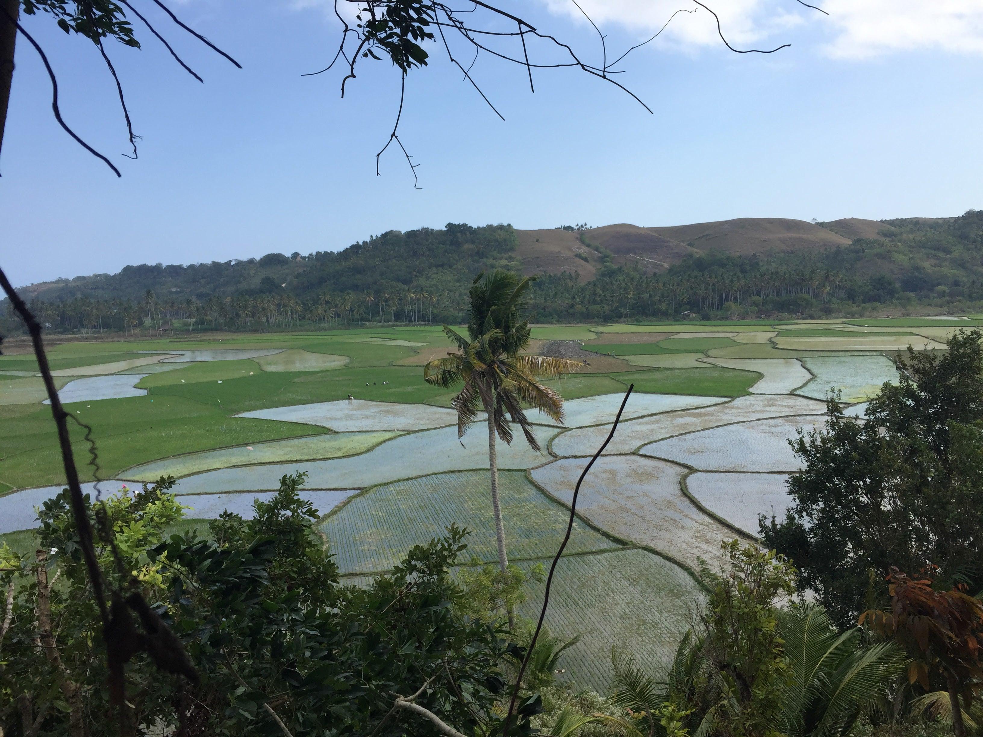 Rice Hill in Sumba