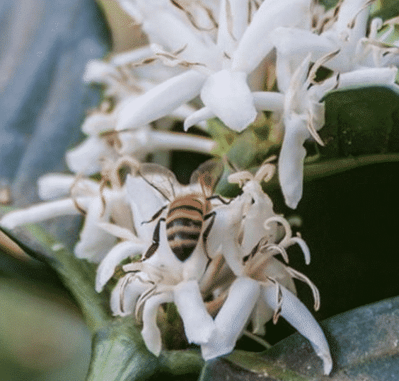 Save the bees of Bali