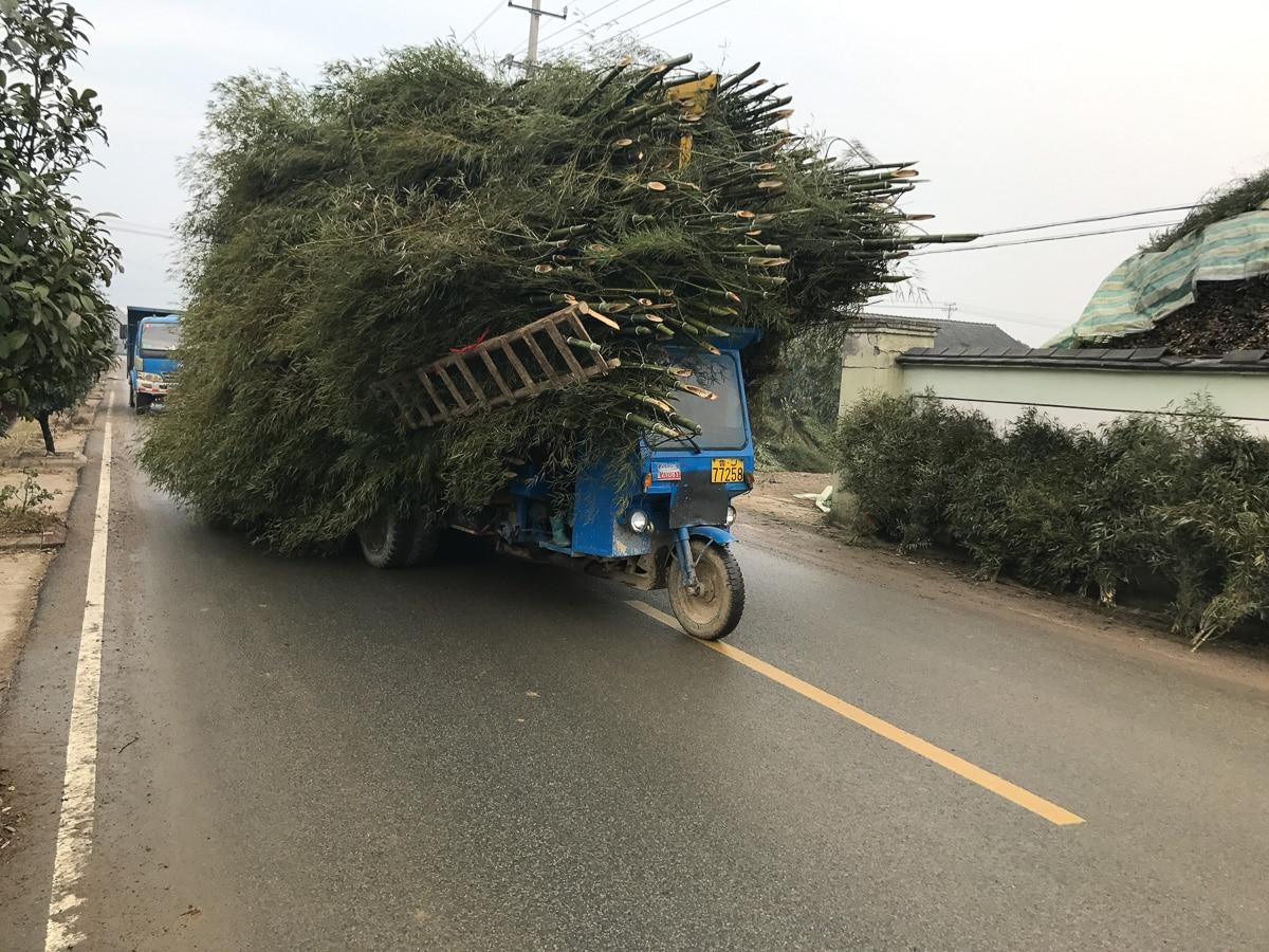 Bamboo load