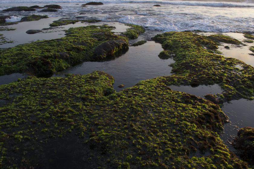 Low tide exploring in Bali