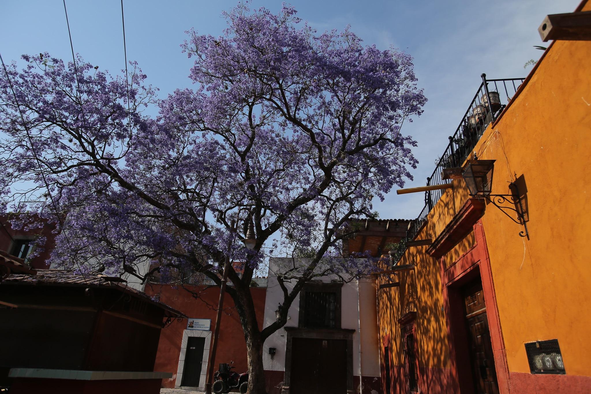 San Miguel de Allende in the spring
