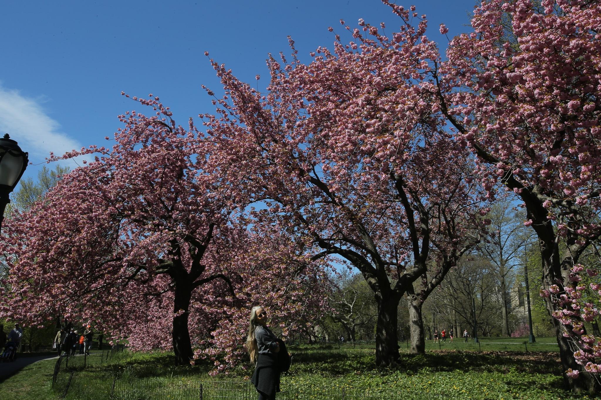 New York in spring