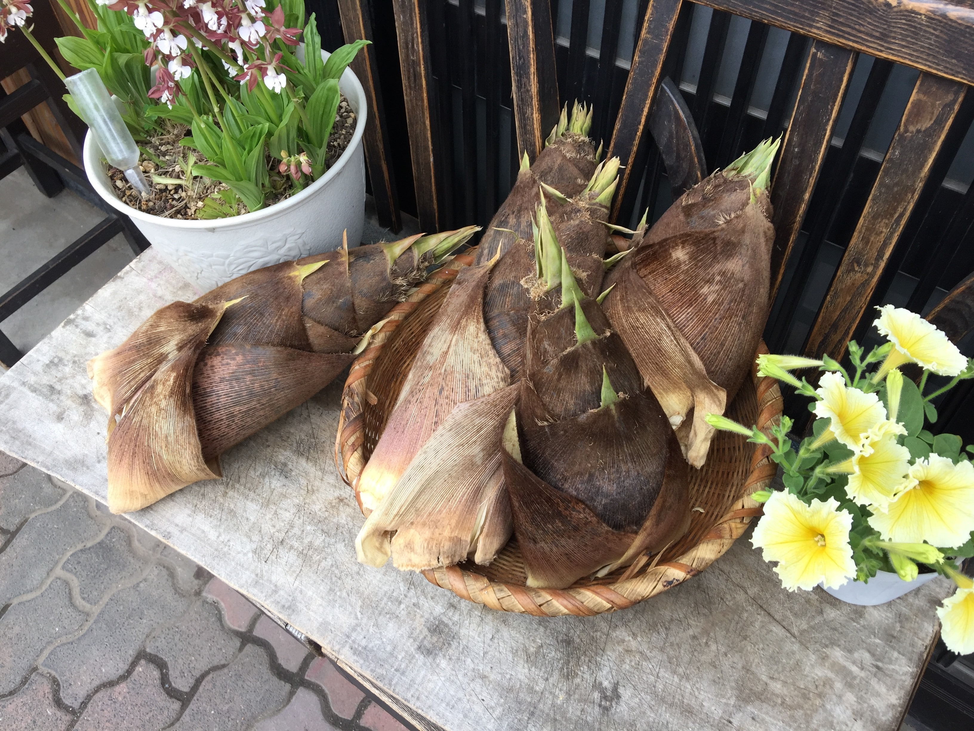 Bamboo shoots in Japan
