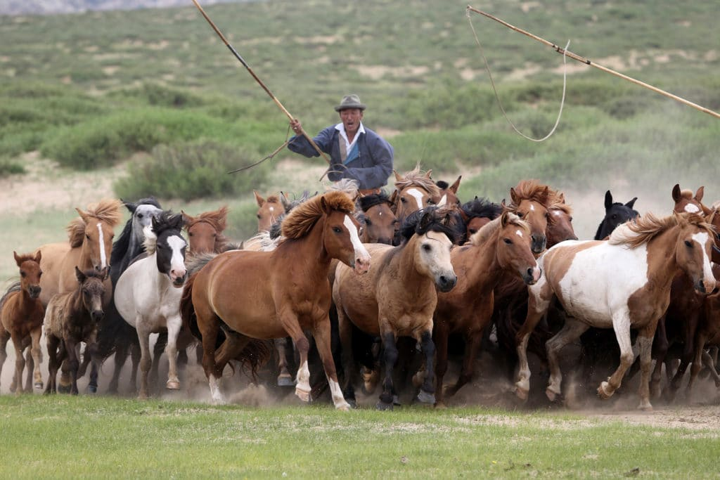 Horse herder in Mongolia