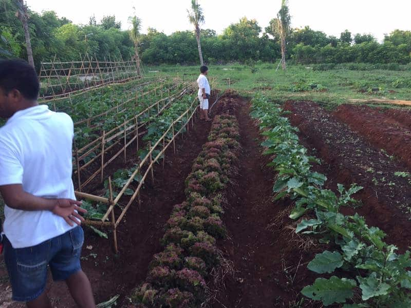 Sumba Hospirality Foundation permaculture gardens