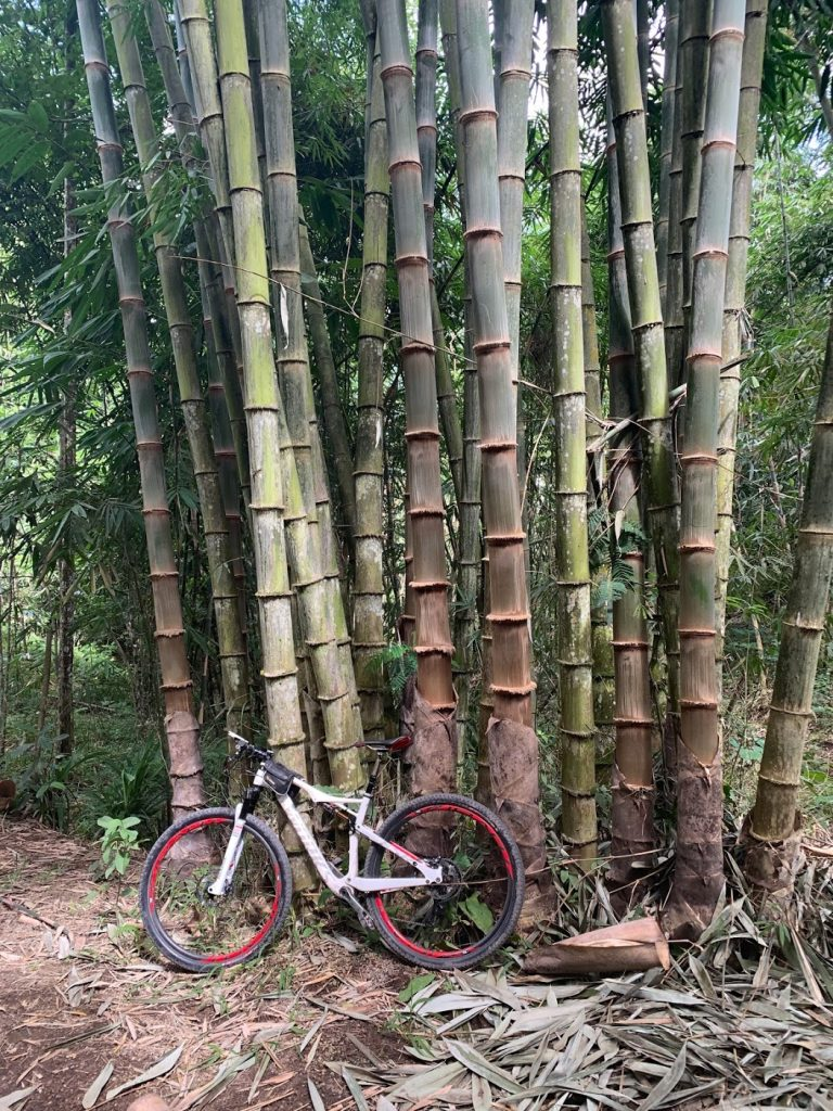 Bicycle and bamboo